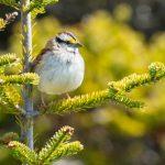 日本と海外の雀について