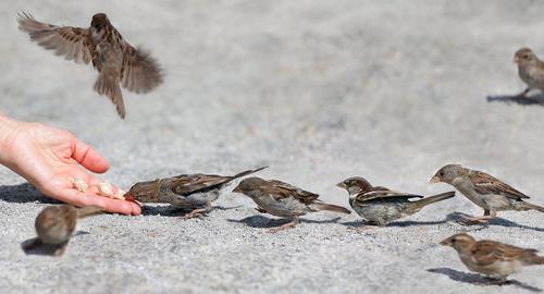 スズメ 冬 餌