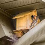 スズメが家に巣作りをすると縁起がいいの!?