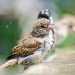 雀の病気の症状とはどういったものでしょう?