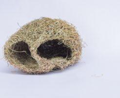 スズメ 巣 作り方